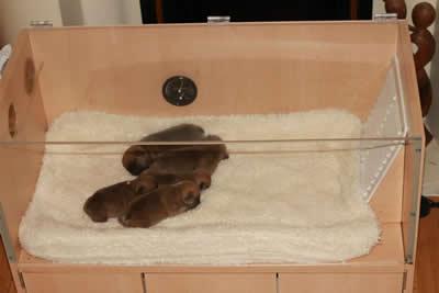 Pet Food Cabinet